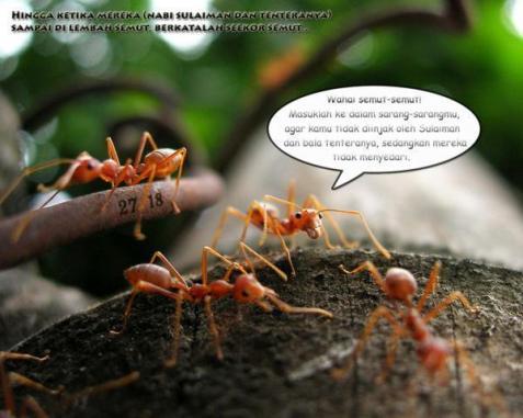 Semut OhSemut